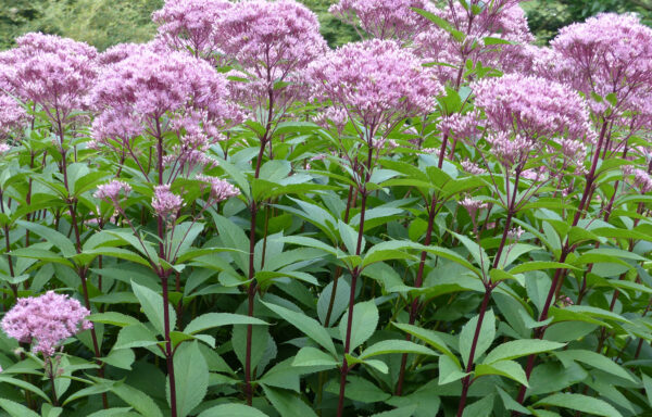 Herbaceous Plants (Upland and Wetland)